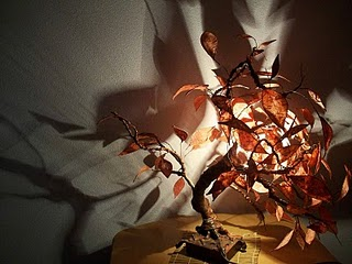 bonsai komorebi II