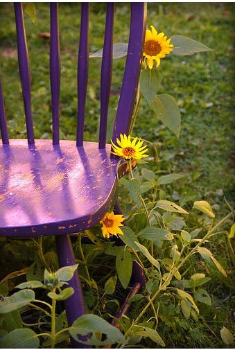 Blog de Marcelina - post violeta